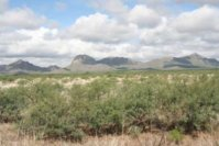 desert4557sm.jpg